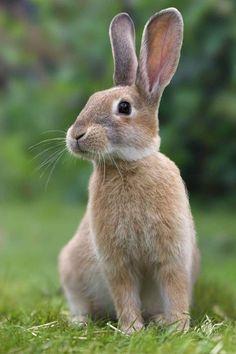 Farm Animals Pictures, Rabbit Pictures, Cute Animal Photos, All Animals Photos, Animal Pics, Nature Animals, Animals And Pets, Funny Animals, Wild Animals