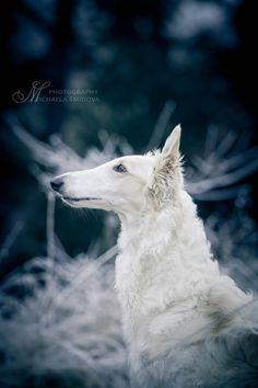 Winter Dog by Michaela Smidova on 500px