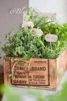 grow herbs in a wooden crate - very pretty!