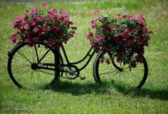 Lovely use for an old bicycle. Bicycle Decor, Bicycle Art, Flower Basket, Flower Pots, Bike Planter, Planter Garden, Old Bikes, Petunias, Yard Art