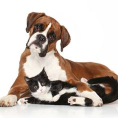 Tell Craigslist Pets Aren't Products! Craigslist must absolutely and without exception ban any and all buying, selling, and giving away of animals on their site. Not tomorrow or the next day. But now.