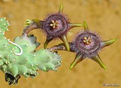 http://esmesanbona.hubpages.com/hub/How-to-Interpret-Flowers-as-Dream-Symbols