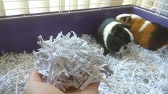 Pet Hacks: DIY Guinea Pig Bedding (recycled shredded paper)
