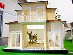 frankfurt, germany: dog mansion called casa misueno: floor heating, lights, webcam and security glass. the chihuahua is named amy.