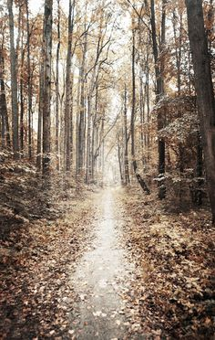 Image shared by Lumi. Find images and videos about nature, autumn and fall on We Heart It - the app to get lost in what you love. Beautiful Roads, Beautiful Places, All Nature, Pathways, Belle Photo, Autumn Leaves, Autumn Trees, Fallen Leaves, Autumn Forest