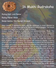 16 Mukhi Rudraksha..