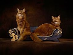 How Elegant do these cats look?!?