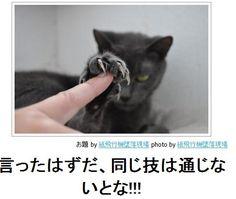 画像 : 【元祖】ネコだけをまとめた「ボケて」傑作選【ハイレベル】 - NAVER まとめ