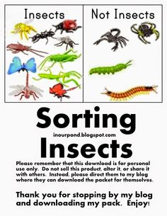 In Our Pond: Sorting Bugs (FREE)