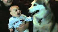 ‪Dog makes baby laugh‬‏, via YouTube.