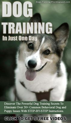 """#Dogs #Training You'd think since a dog's nickname is """"A Man's Best Friend"""" that it would be easy to modify a dog's bad behavior and #train them. But obviously, this does not always go smoothly. Dogs can have a lot of behavioral issues and owners are usually left wondering… """"WHY is it so difficult to control and train my own dog?"""" Click the picture and I will show you how to #teach your #dog and #puppy with ease."""