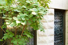 jen_catto_smoke-bush-grille_facade_brooklyn_Gardenista_DSC00326