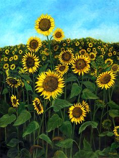 Sunflowers at Pete's Farm, by J.M. Long