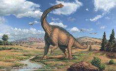 Thirty million years after sauropod dinosaurs had become extinct in what is now North America, the sauropod Alamosaurus reappeared there. Description from absolutelyprehistoric.com. I searched for this on bing.com/images