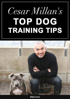 Cat Training Tips Cesar Millan spills some of his best secrets for training your furry friend Pet Accessories, Dog Toys, Cat Toys, Pet Tricks - When Cesar Millan talks dog training, we're all ears. Puppy Training Tips, Training Your Dog, Potty Training, Agility Training, Cesar Millan Puppy Training, Training Equipment, Safety Training, Training Classes, Leash Training