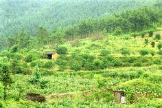 The edge of a farming village