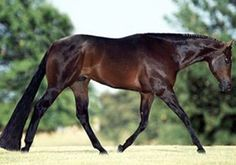 Man with the Moves, Champion Huntseat AQHA sire