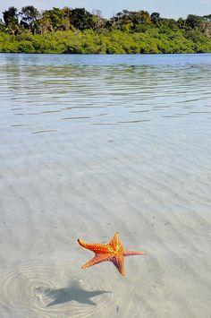 floating starfish in panama