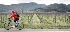 Napa Valley Vine Trail - http://www.activexplore.com/activity/napa-valley-vine-trail/