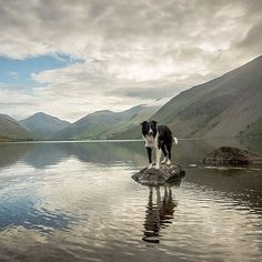 Paddy the Border Collie knows how to outshine even the best views. You can have a go at posing on this rock overlooking Wastwater in the Lake District with Great Gable in the distant background, if you don't mind the cold water!