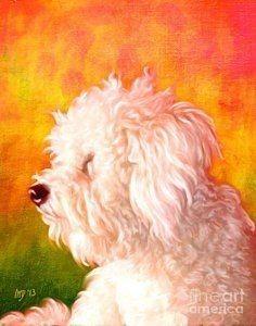 Bichon Painting - Bichon Frise Dog Art by Iain McDonald Portrait Art, Pet Portraits, Bichon Dog, Poodle, Wolf Pictures, Rainbow Art, White Dogs, Baby Dogs, Art Plastique