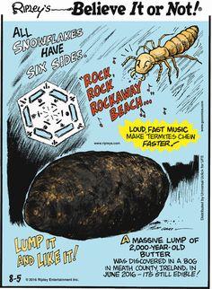 Loud, fast music make termites chew faster! Medical Mnemonics, Ripley Believe It Or Not, True Crime, Macabre, Creepy, Cartoons, Comic, History, Cartoon