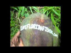 I Love Florida Fishing Video Ad Coconut Tree