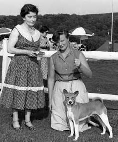 #Basenji at the 1956 judging.