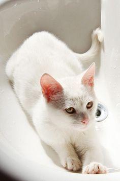 Its a bathtime: sink cats