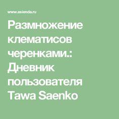 Размножение клематисов черенками.: Дневник пользователя Tawa Saenko