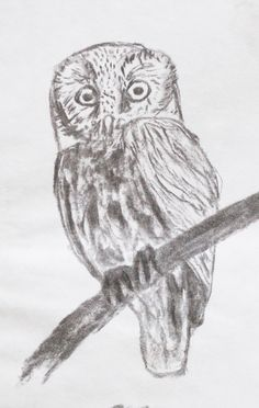 owl charcoal drawing
