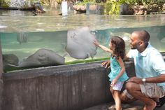 Located about 20 minutes from Merritt Island, the Brevard Zoo is home to more than 650 animals and provides loads of family fun. Hgtv Dream Home 2016, My Dream Home, Florida Style, State Of Florida, Brevard Zoo, Merritt Island, 2016 Pictures, Wonderful Places, Adventure
