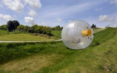 A person 'zorbing' - rolling down a hill in a giant ball