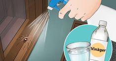 Om du gör detta kommer du aldrig att se spindlar i köket, badrummet eller sovrummet igen!