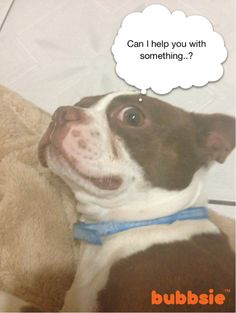 Lol #dogs