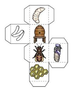 Bees Life Cycle, Bee Themed Math, Graphing Activities, Poetry Search Honey bee life cycle learning cube, with graphing activities and. Graphing Activities, Science Activities For Kids, Writing Activities, Kindergarten Writing, Kindergarten Activities, Montessori Activities, Honey Bee Life Cycle, Life Cycle Craft, Graphing Worksheets