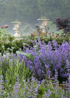 Lavender garden-Gypsy Purple Home Magic Garden, Dream Garden, Beautiful Gardens, Beautiful Flowers, Dubai Miracle Garden, Purple Home, Cottage In The Woods, My Secret Garden, Parcs