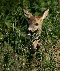 deer #hunting#nature#awesome#deer#animal#cute