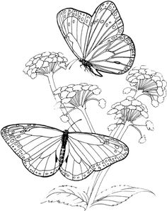 Butterfly Coloring Pages 41 | Purple Kitty