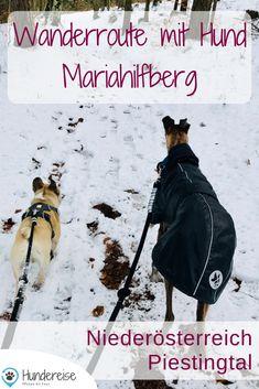 Schnee Wanderung am Mariahilfberg in Gutenstein. Im Winter mit Hund unterwegs im Piestingtal, Niederösterreich.  Wandern mit Hund | Wanderung | Österreich | Winter | Winterwandern