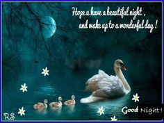 Hope you have a beautiful night and wake up to a wonderful day. Good Night!