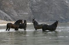 PRE stallions in the Mediterranean sea, by Juliane Meyer.