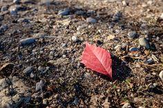 foglie d'autunno - in questo periodo ci sono dei boschi con colori meravigliosi, ma io preferisco concentrarmi sulla bellezza della singola foglia...