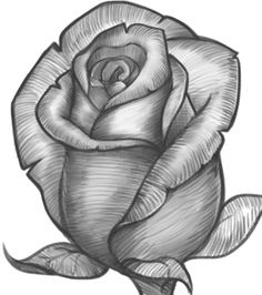 how to draw a rose bud, rose bud                                                                                                                                                                                 Plus