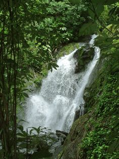 Here among Costa Rica's largest trees can be found Central America's densest populations of tapir, jaguar and scarlet macaws. Corcovado National Park, National Geographic Society, Down The River, Tropical Garden, Central America, Costa Rica, Acre, Waterfall, The Incredibles