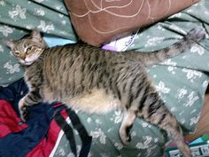 Today's cat on 16th June 2012 by ganchan2, via Flickr