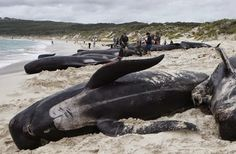 Animal Die-Offs Continue across the globe from antelopes to bees to seabirds