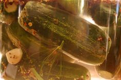 A few recipes:  Simple Sauerkraut; Apple & Juniper Berry Sauerkraut; Lacto-fermented salsa; Sour pickles; Kimchi; Beet Kvass; Sauerrüben (lacto-fermented turnips); Lacto-fermented peach chutney; Lacto-fermented vegetable medley;