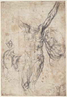 Michelangelo  Studies for Sistine ceiling - Creation of Adam  ca. 1511  drawing  Teylers Museum, Haarlem      Michelangelo  Studies for Si...