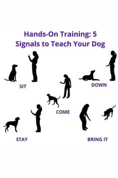 Training Your Dog, Bring It On, Hands, Dogs, Movie Posters, Character, Pet Dogs, Film Poster, Doggies